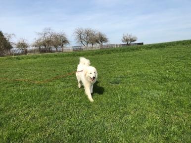 Die Bella auf der großen Feldwiese, …