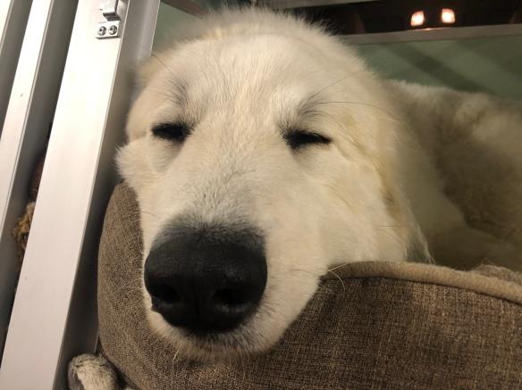 Die Bella muß sich ausruhen