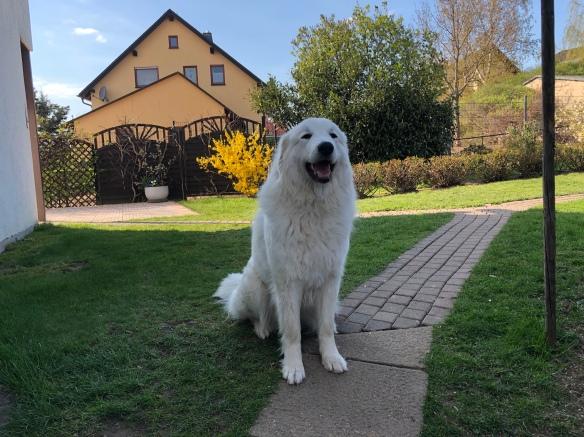 Die Pyriprinzessin in ihrem Garten. Gleich geht es zur Hundeschule!