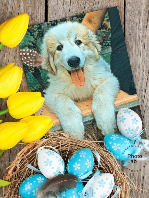 Die Oster-Bella wünscht allen ein schönes Osterfest