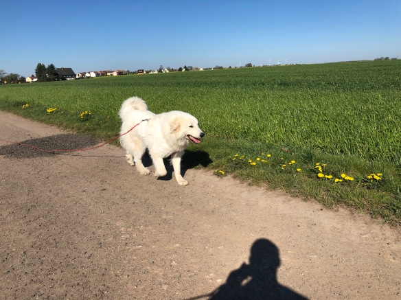 Die Bella wandert auf dem Feldweg zum großen Fluß mit dem komischen Namen