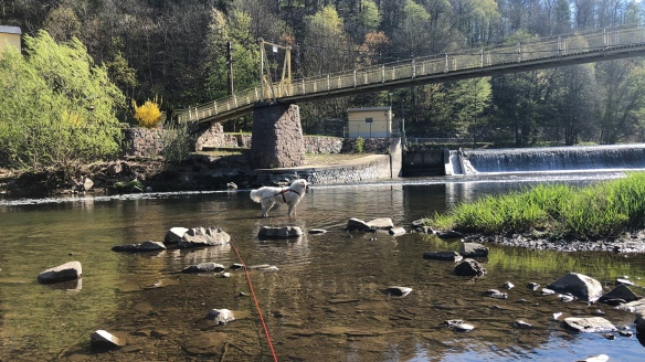 Jetzt kann die Bella sogar auf dem Wasser stehen 🐶😂🐶