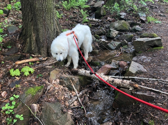 Die Bella schnuffelt am kleinen Wasserfall