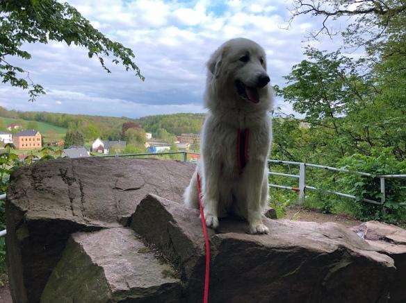 Die Bella beim Spaziergang im Stadtpark