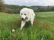 Da bin ich! Guckt mal das schöne Gras an.