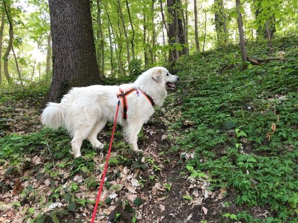 Die Bella beim Klettern im Stadtpark