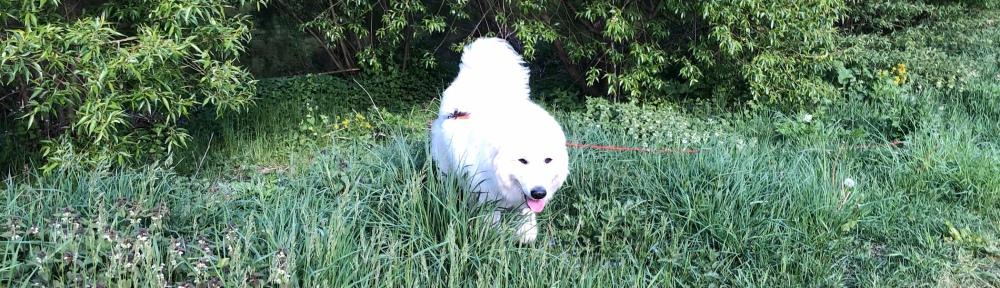 Die Bella führt ihren großen Mensch spazieren