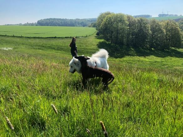 Die Bella mit der Cora und der großen Menschenschwester auf der Großen Wiese mit ganz viel buntem Gras