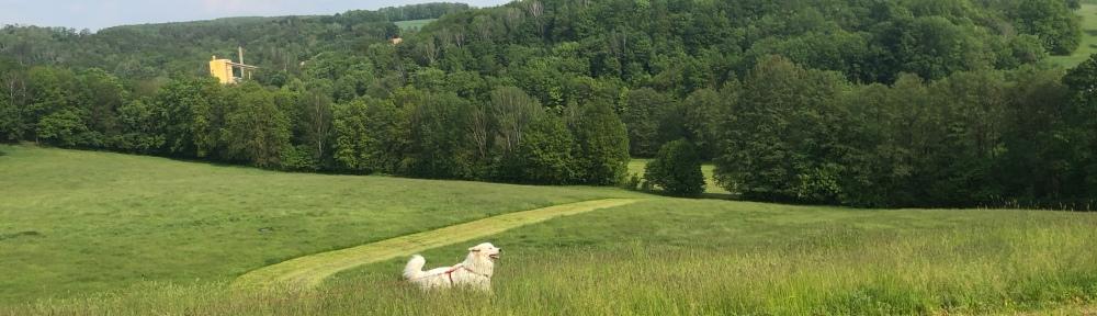 Die Bella im hohen Gras