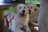 Die Bella und ihr großer Bruder Pepe
