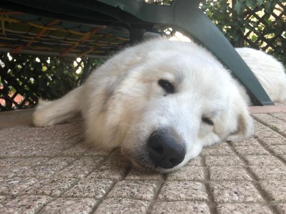 Die Bella ist müde