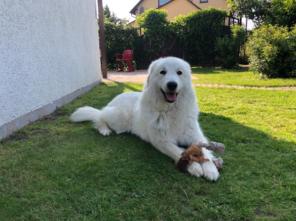 Die Bella mit ihrem Lieblingsspielzeug in ihrem Garten