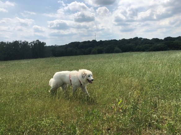 Und auf meiner großen Feldwiese