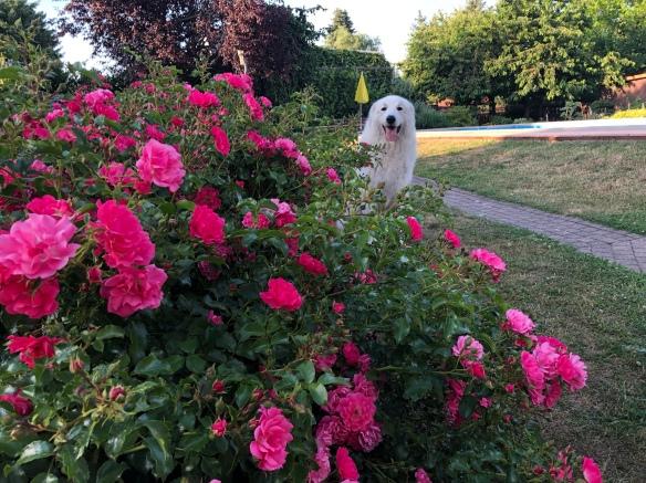 Ich bin ein Blumenkind