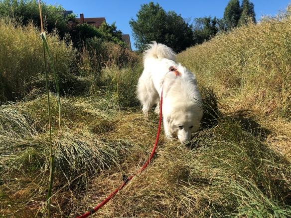 Wir starten zum Sonntagsspaziergang