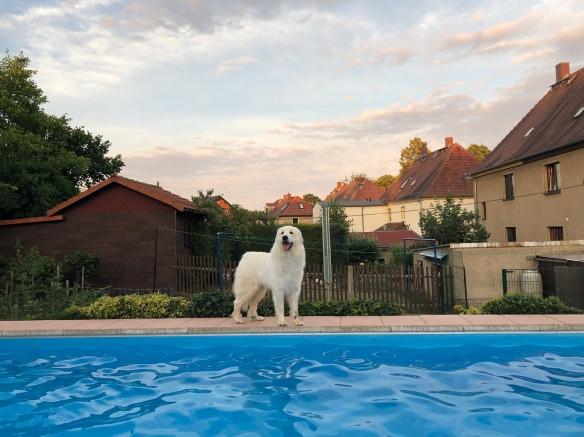 An meinem Pool