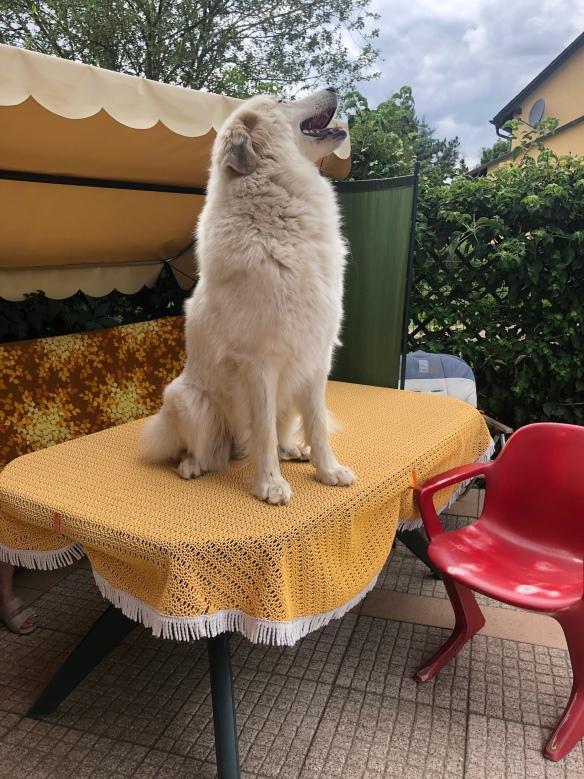 Hunde gehören nicht auf den Tisch! Niemals!