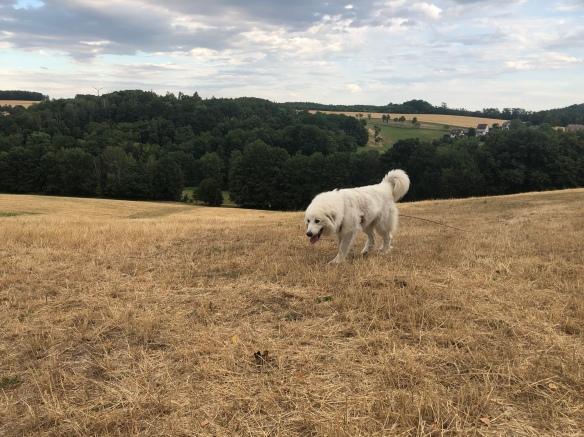 Die Bella auf der großen Wiese