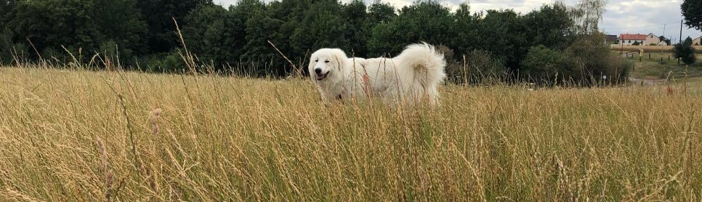 Die Bella im hohen Gras auf ihrer großen Feldwiese