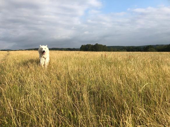 Juhu, auf meiner großen Feldwiese flitzen