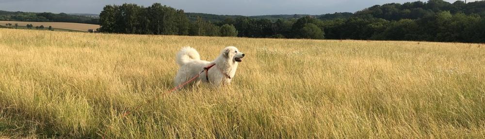 Die Bella beim Abendspaziergang auf ihrer großen Feldwiese