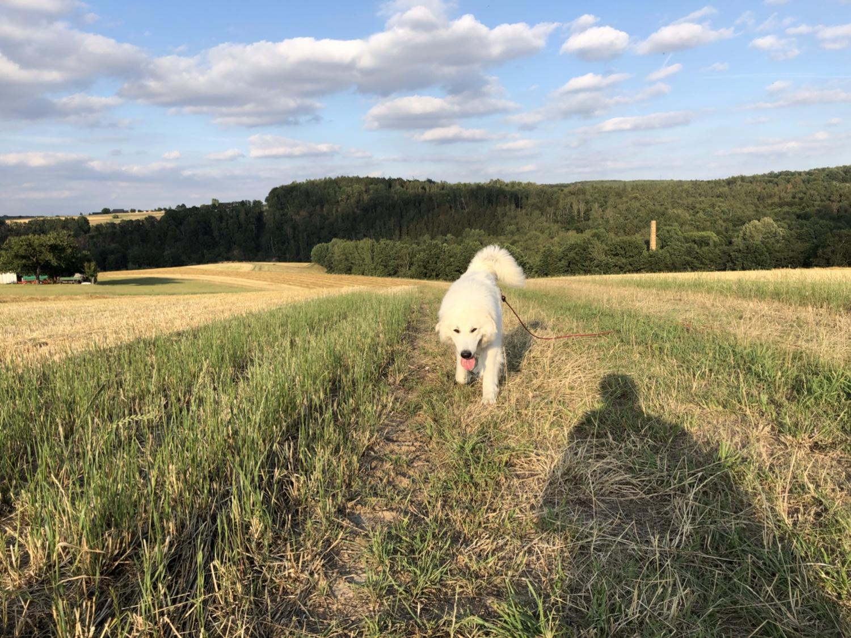 Die Bella auf dem Feld