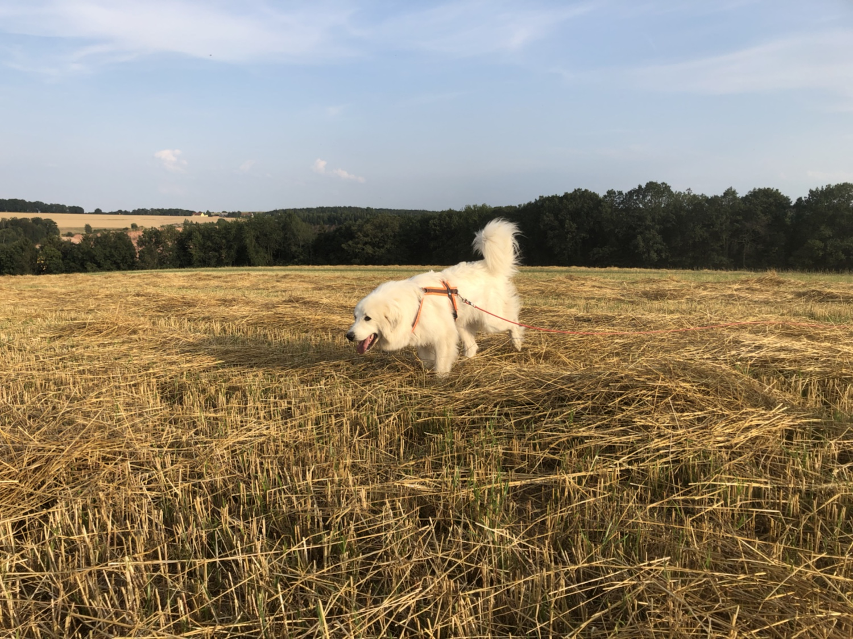 Die Bella auf dem großen Feld