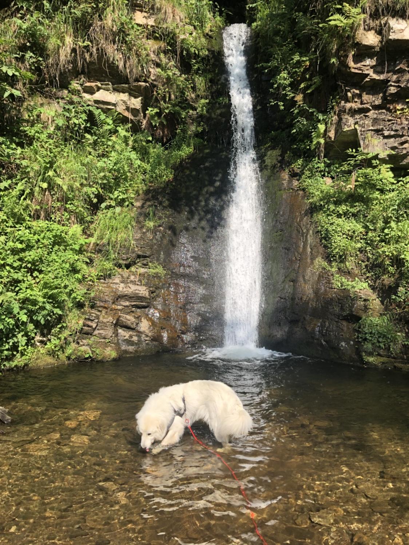 Die Bella im See am kleinen Wasserfall