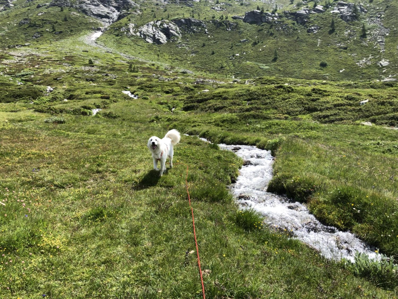 Am wilden Bächlein über die bunte Bergwiese flitzen