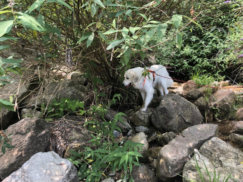 Ich bin eine Pyrenäenberghündin, ich kann klettern!