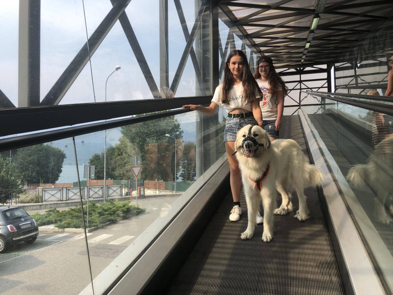 Die Bella kann Rolltreppe fahren. Das ist ganz komisch!