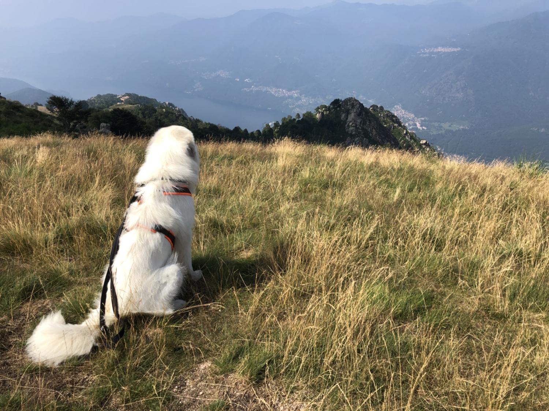Die Bella staunt die Berge an