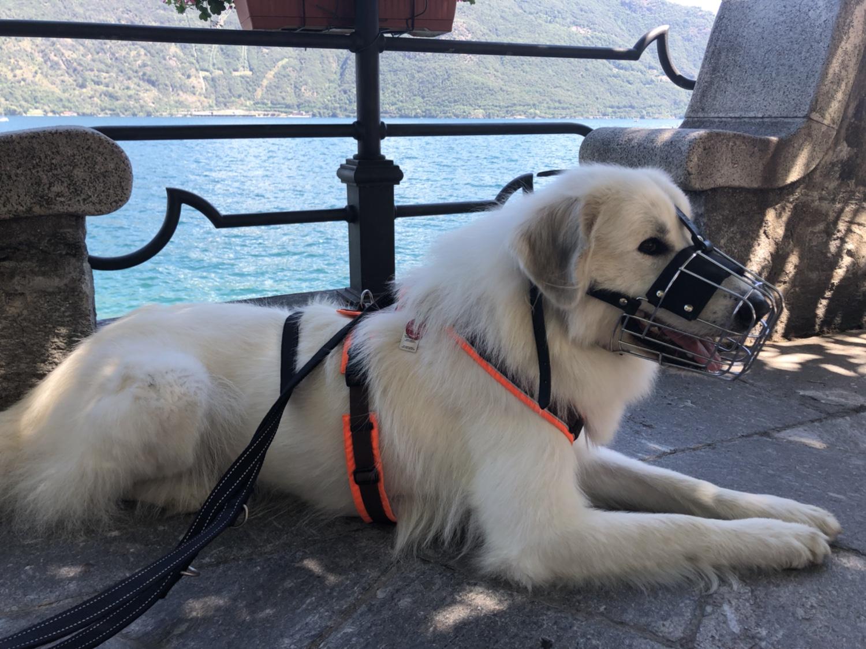Die Bella am Lago Maggiore in Cannobio – ich bin auch mit Nasenzaun schön!