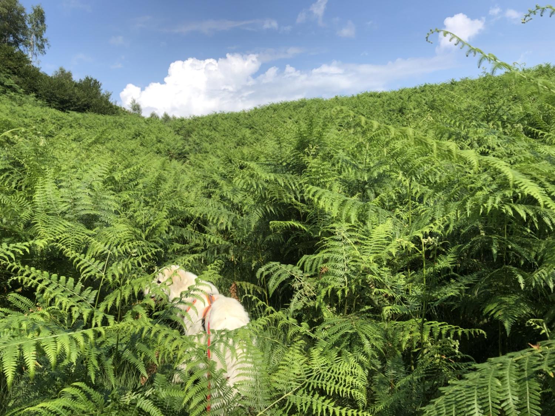 Die Bella im Riesenfarn-Wald