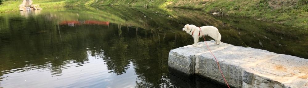 Die Bella wacht am großen Teich!