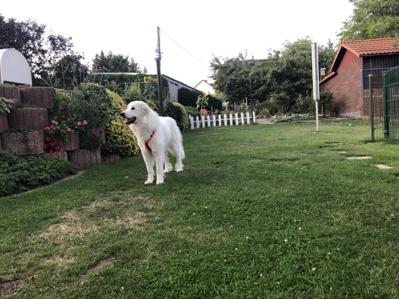 Nach der Hundeschule in meinem Garten
