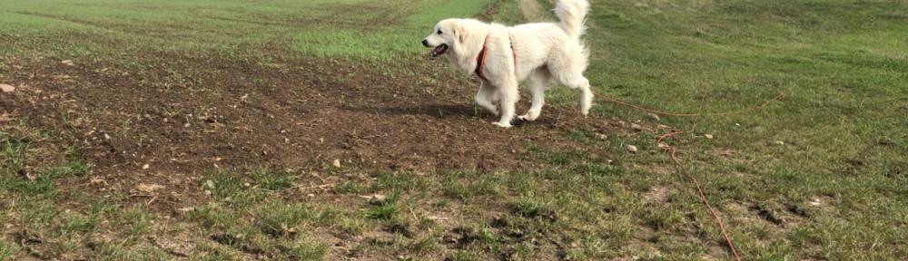 Die Bella geht mit ihrem großen Mensch spazieren.