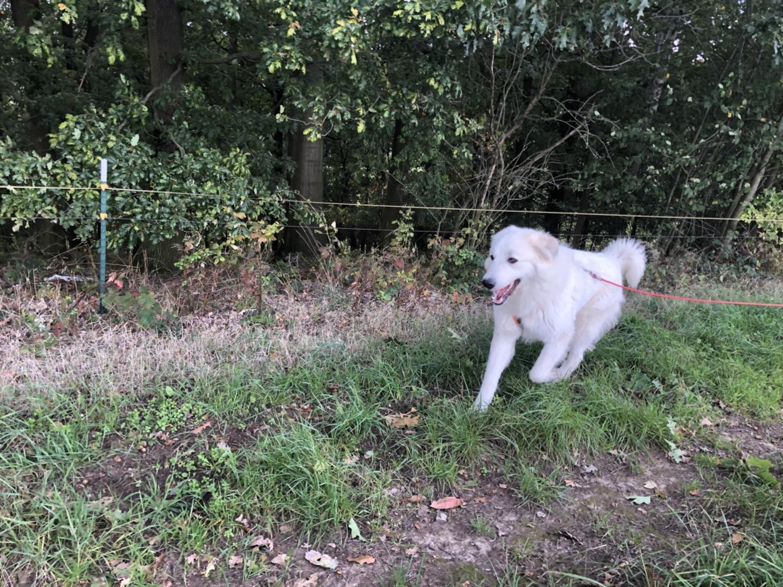 Die Bella flitzt am Waldrand lang