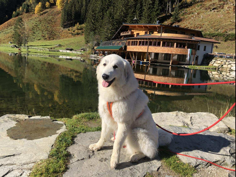 Die Bella am Steirischen Bodensee