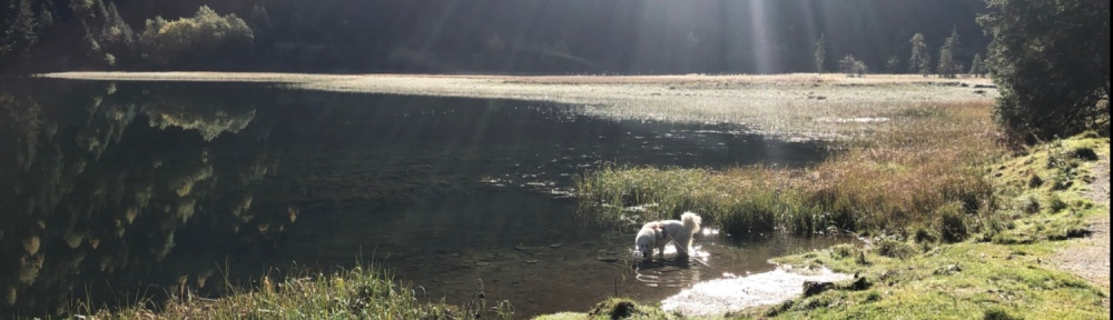 Die Bella im Steirischen Bodensee