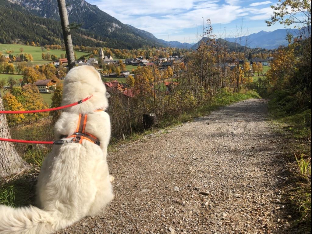 Die Bella guckt sich nochmal ihren Urlaubsort an …