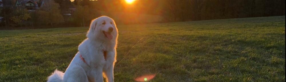 Bellas Sonnenuntergang 🐶🥰👸🏼