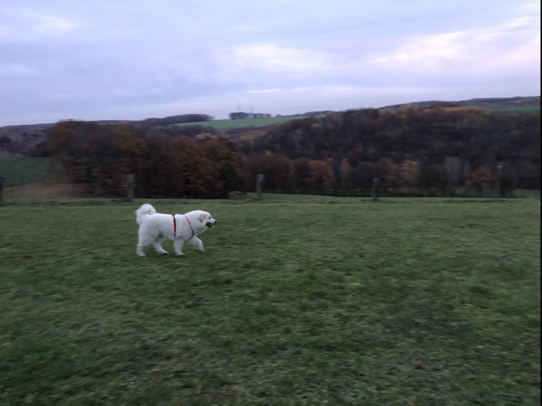 Spaziergang auf meiner großen Feldwiese