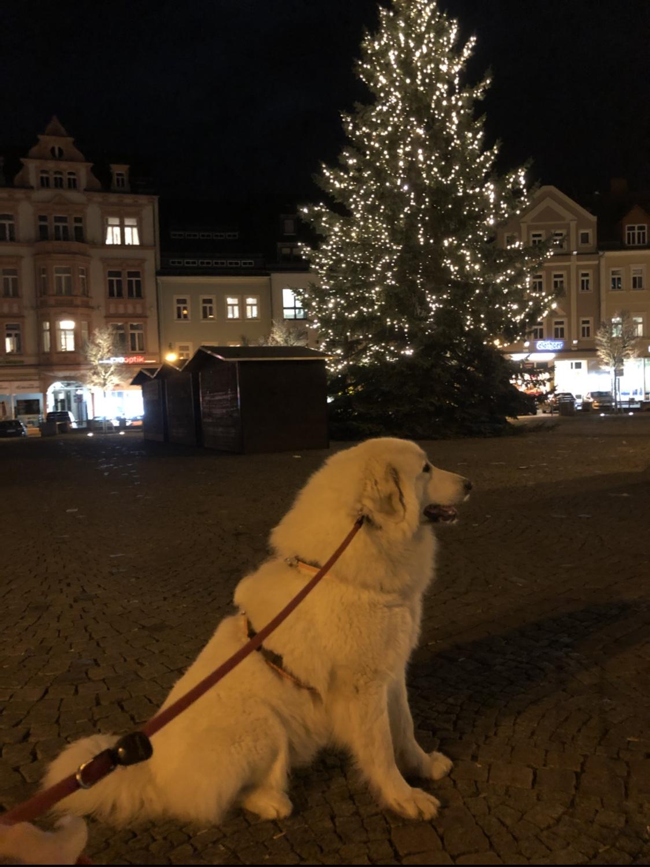 Die Bella am riesigen Weihnachtsbaum