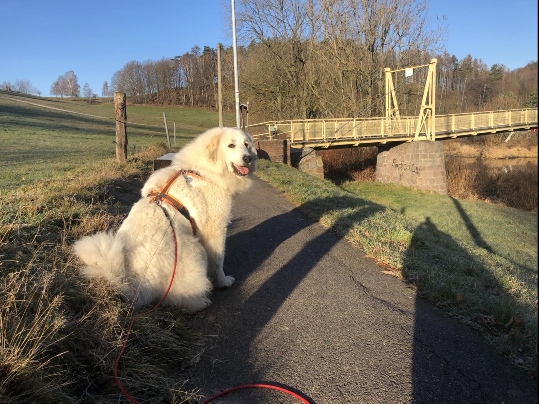 Die Bella mit ihrer lieben Sonne an der Wackelbrücke