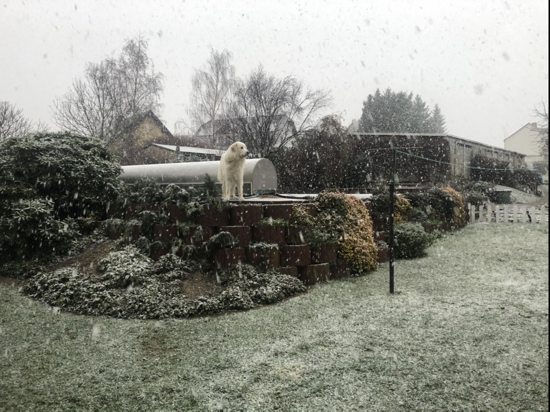 In meinem Garten ist Winter und es schneet!