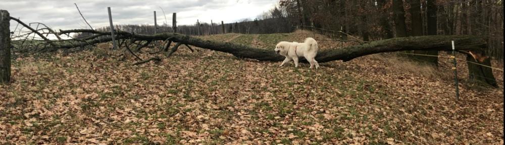 Da hat der freche Pustewind einen dicken Baum umgewienert. Einfach so über die Wiese zwischen Wald und Feld.