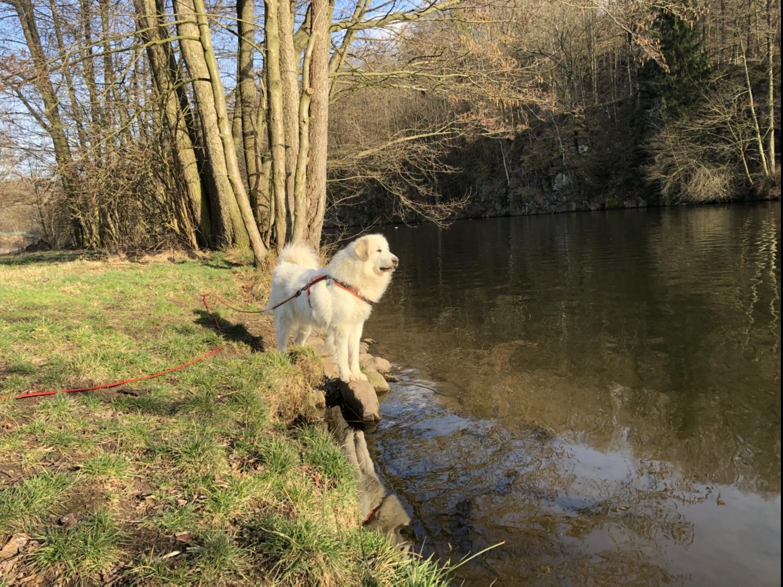 Die Bella am großen Fluß mit dem komischen Namen