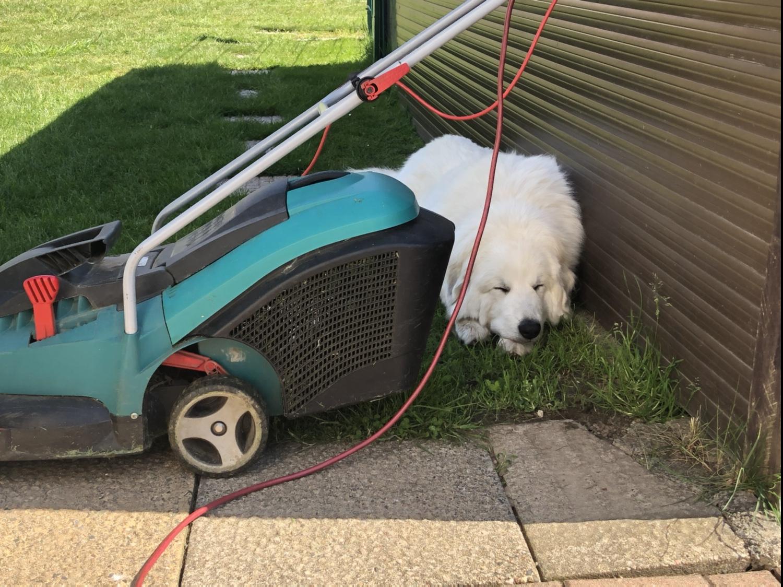 Die Bella ist fleißig und macht Gartenarbeit