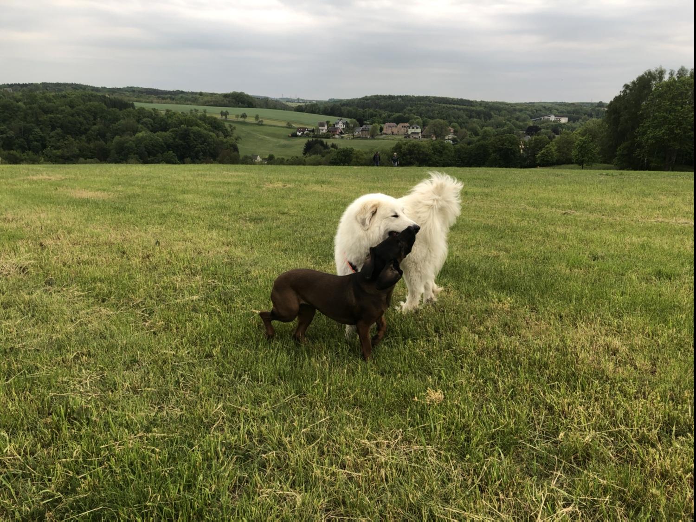 Die Bella und die Cora